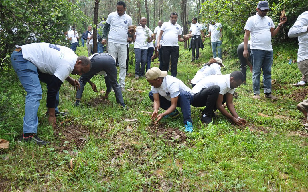 Dashen Bank – Tree Planting Campaign